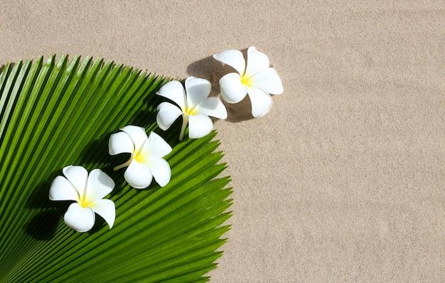 Plumeria białe kwiaty z liści palmowych wentylatora fidżi na piasku. widok z góry