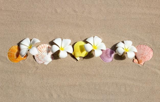 Plumeria białe kwiaty z muszelkami na piasku. widok z góry