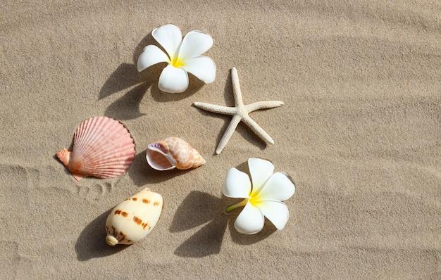 Plumeria białe kwiaty z rozgwiazdy i muszle na piasku. widok z góry
