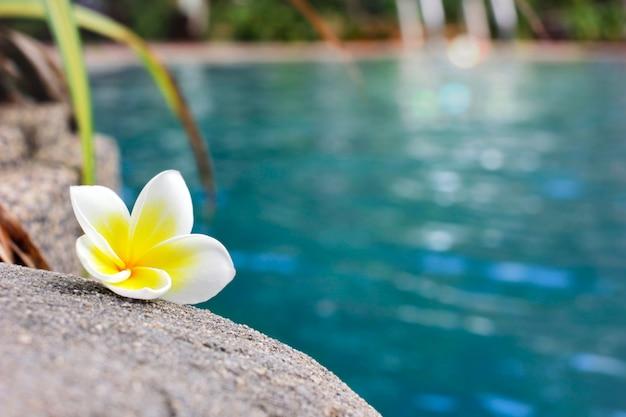 Plumeria kwitnie na skraju basenu w relaksujący dzień.