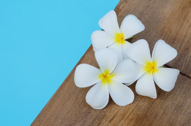 Plumeria tropikalnych kwiatów na basenie