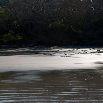 Pluskocze w piasku wzdłuż costa rica linii brzegowej