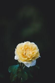 Płytkie fokus żółtego kwiatu