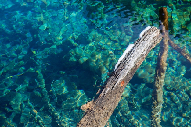 Pnia drzewa w wodzie.