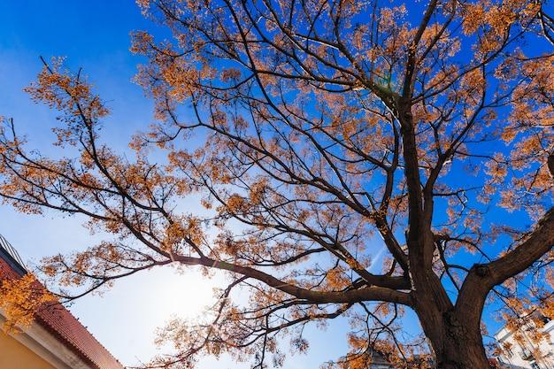 Pnia i gałęzie drzewa z żółtymi liśćmi na tle błękitnego nieba i słońca