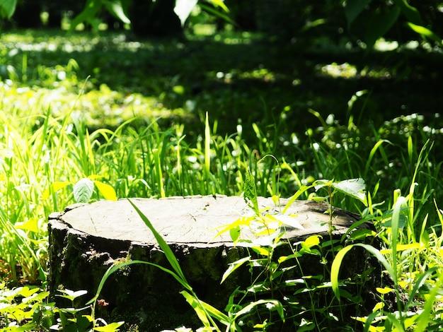 Pniak w jesiennym lub letnim lesie jako podium do projektowania produktu, ścięte drzewo i rozmyte tło jako baner do wyświetlania produktu