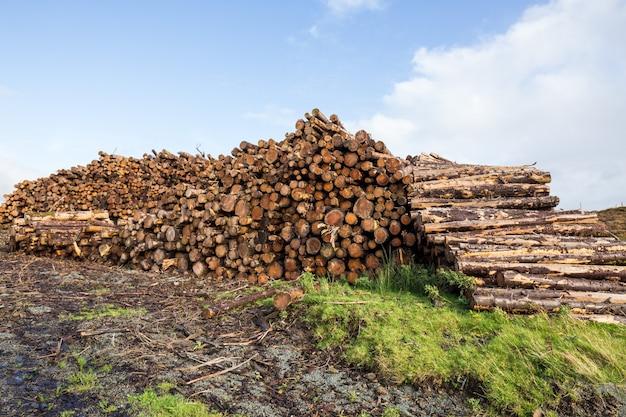 Pnie drzew cięte i układane w stosy dla przemysłu drzewnego
