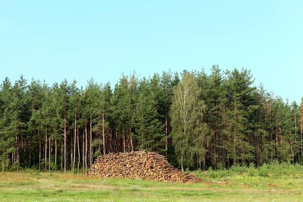 Pnie drzew ułożone razem podczas zbioru. zdjęcie latem, las i błękitne niebo w tle