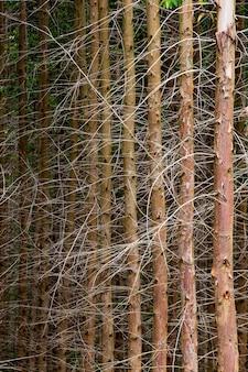 Pnie eukaliptusa w symetrycznej kompozycji