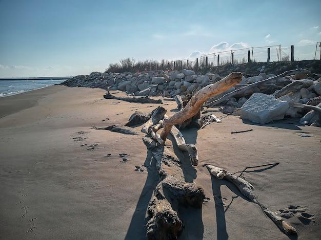 Pnie i kawałki drewna transportowane brzegiem morza przez pływy na naturalnej plaży w północnych włoszech.