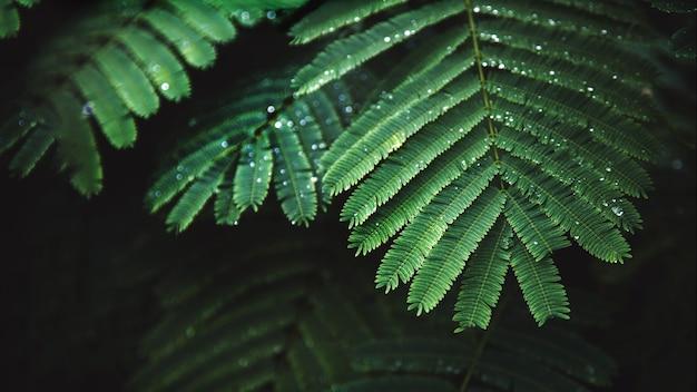 Po deszczu krople rosy na jasnozielonych liściach. mokra trawa zbliżenie z kroplami wody po deszczu. świeże rośliny na tle przyrody.