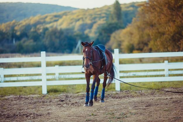 Po farmie spaceruje piękny brązowy koń