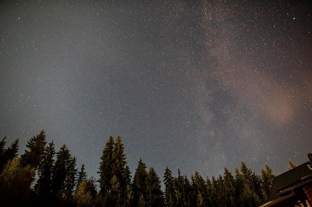 Pochmurna gwiaździsta noc z wiecznie zielonymi drzewami