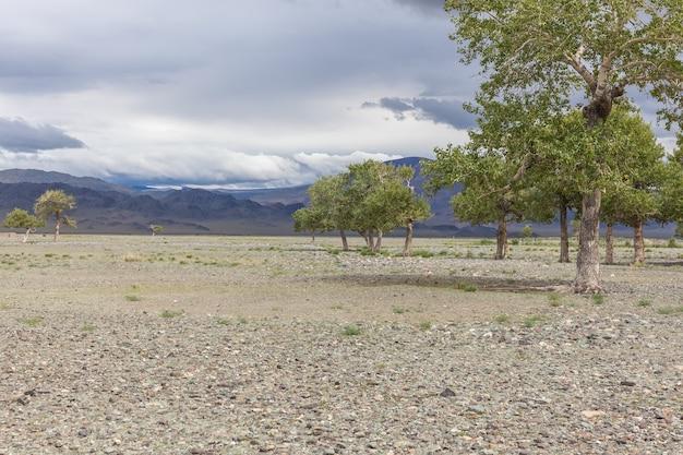 Pochmurna pogoda. na skalistej glebie mongolskich gór rosną drzewa