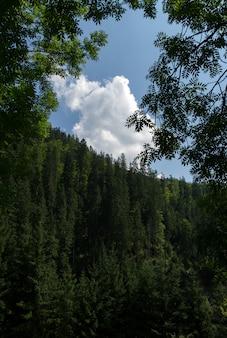 Pochmurne niebo otoczone drzewami w lesie górskim