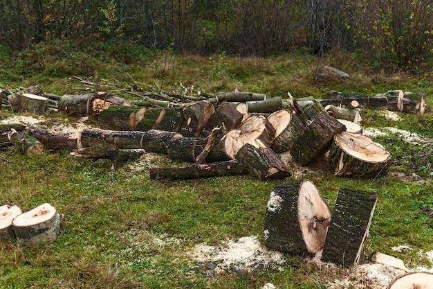 Pocięte kawałki drzewa, kłody drzewa na trawie. przetarty pień, buk