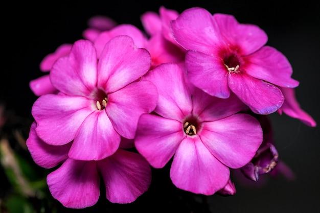 Pocztówka artystyczna fotografia makro jesienny kwiat w liliowych odcieniach na ciemnym tle