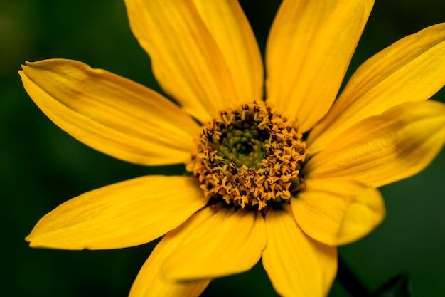 Pocztówka artystyczna fotografia makro jesienny kwiat w odcieniach złota na ciemnym tle