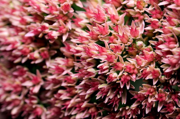 Pocztówka artystyczna fotografia makro jesienny kwiat w różowych odcieniach na ciemnym tle