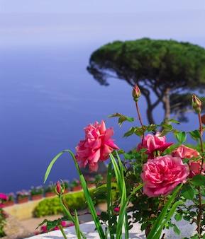 Pocztówka z widokiem na zatokę salerno na morzu tyrreńskim z villa rufolo w ravello. róża na pierwszym planie. kampania, włochy