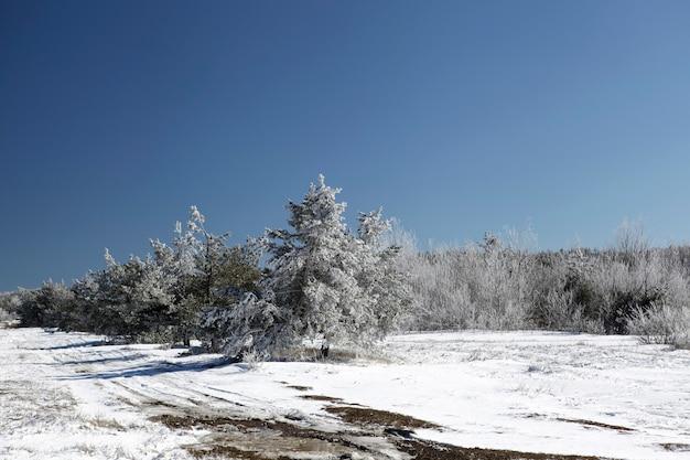 Poczucie świąt bożego narodzenia na skraju zimowego lasu w mroźny dzień
