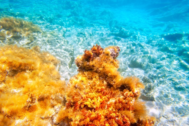 Pod dnem morza podwodne wyspy baearic