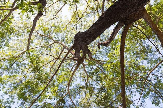 Pod drzewem z gałęziami