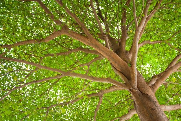 Pod drzewem.