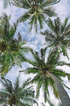 Pod liśćmi palmy widać chmury na niebie. widok liści palmowych od dołu.