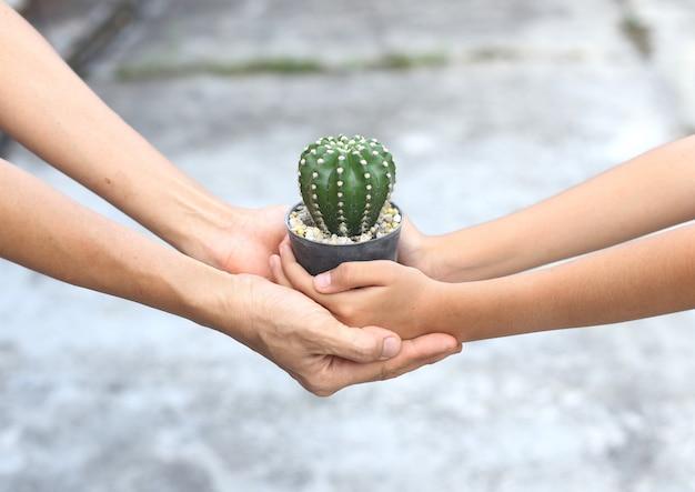 Podaj garnek z kaktusami innym