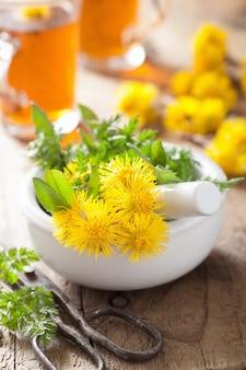 Podbiał kwitnie wiosennymi ziołami w moździerzu i herbacie ziołowej