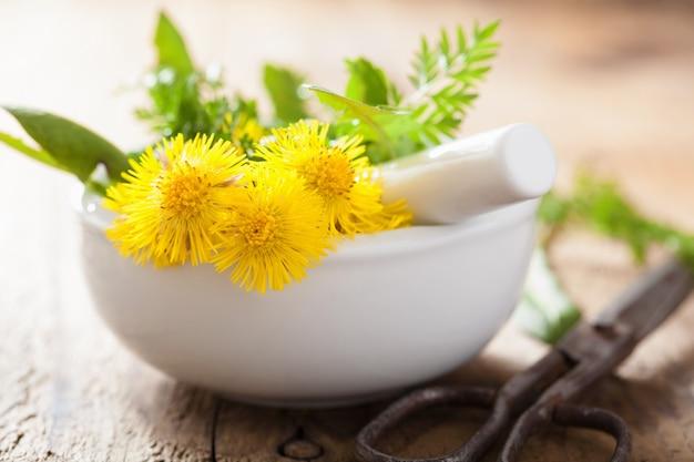 Podbiału kwiaty wiosenne zioła w moździerzu