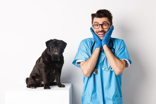 Podekscytowany młody mężczyzna lekarz weterynarii podziwiając słodkie zwierzę siedzi na stole. śliczny czarny mops pies czeka na badanie w klinice weterynaryjnej, białe tło
