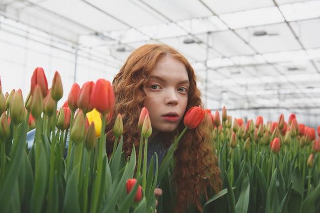 Podglądanie tulipanów