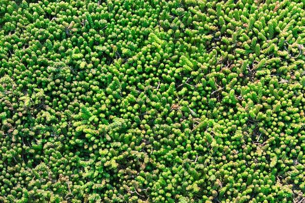 Podłoga sztuczna trawa zielona