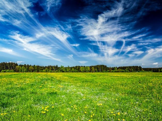 Podłoga z desek i letnia łąka