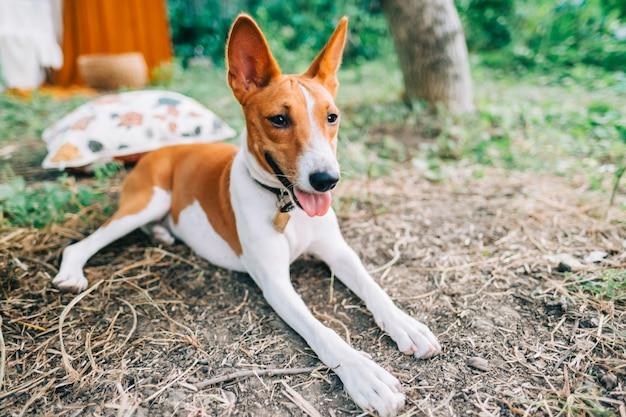 Podłość pies odpoczywa na świeżym powietrzu na podwórku latem.