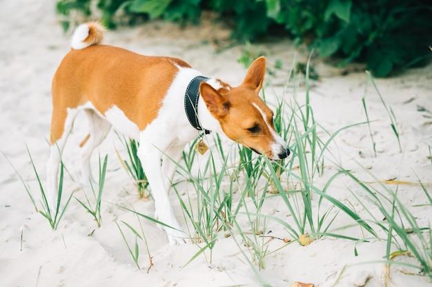 Podłość pies spaceru na plaży w słoneczny letni dzień