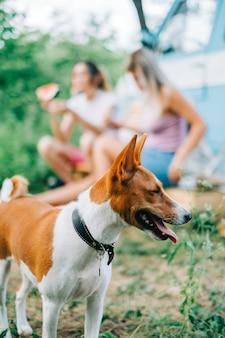 Podłość pies spaceru na świeżym powietrzu podczas przerwy w podróży z rodziną.