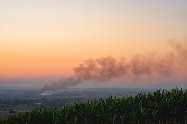 Podpalenie lasu powodujące dym, zanieczyszczenie środowiska takie jak kurz i smog.