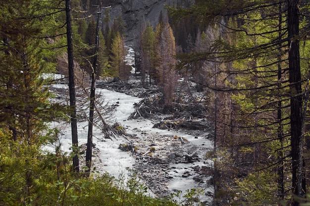 Podróż pieszo przez górskie doliny. piękno dzikiej przyrody. ałtaj, droga do jezior szawlińskiego
