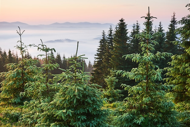 Podróże, trekking. letni krajobraz - góry, zielona trawa, drzewa i błękitne niebo.