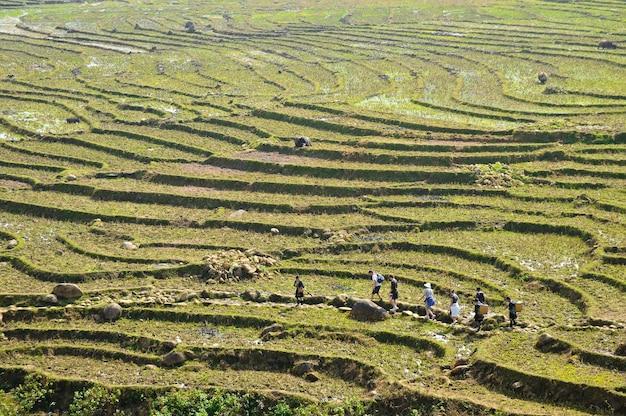 Podróżnicy chodzi przez zielonych ryżowych pola na górach w północnym wietnam