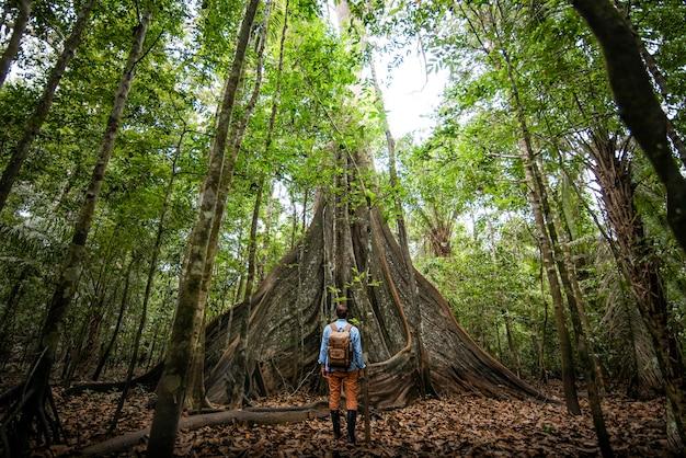 Podróżnik odkrywca obserwujący drzewa amazonii