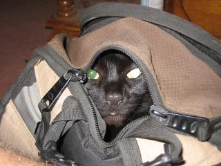 Podstępne kota!