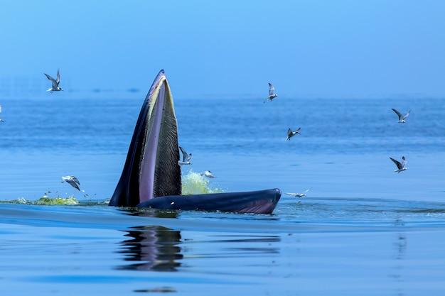 Podstępne wieloryby pływające w morzu.