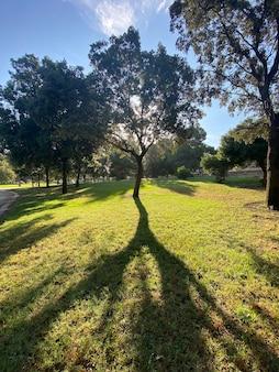 Podświetlane drzewo z sylwetką w ogrodzie