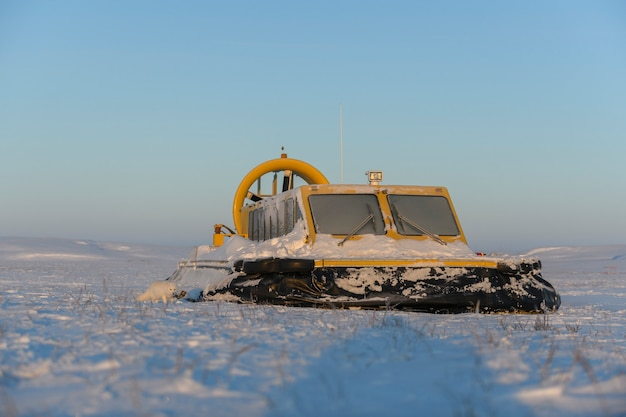 Poduszkowiec i lis polarny w zimowej tundrze. poduszka powietrzna na plaży. żółty poduszkowiec pod śniegiem.