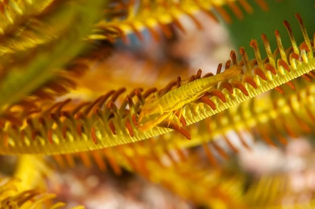 Podwodna fotografia makro zwierząt morskich. roślinność, stworzenia pod wodą. życie morskie pod wodą w oceanie. obserwacja świata zwierząt. przygoda z nurkowaniem na morzu salomona, papua nowa gwinea