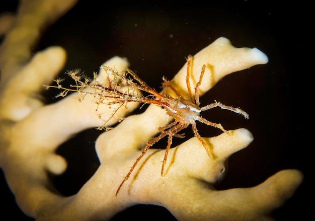 Podwodna fotografia makro zwierząt morskich. roślinność, stworzenia pod wodą. życie morskie pod wodą w oceanie. obserwacja świata zwierząt. przygoda z nurkowaniem w morzu czerwonym, wybrzeże afryki